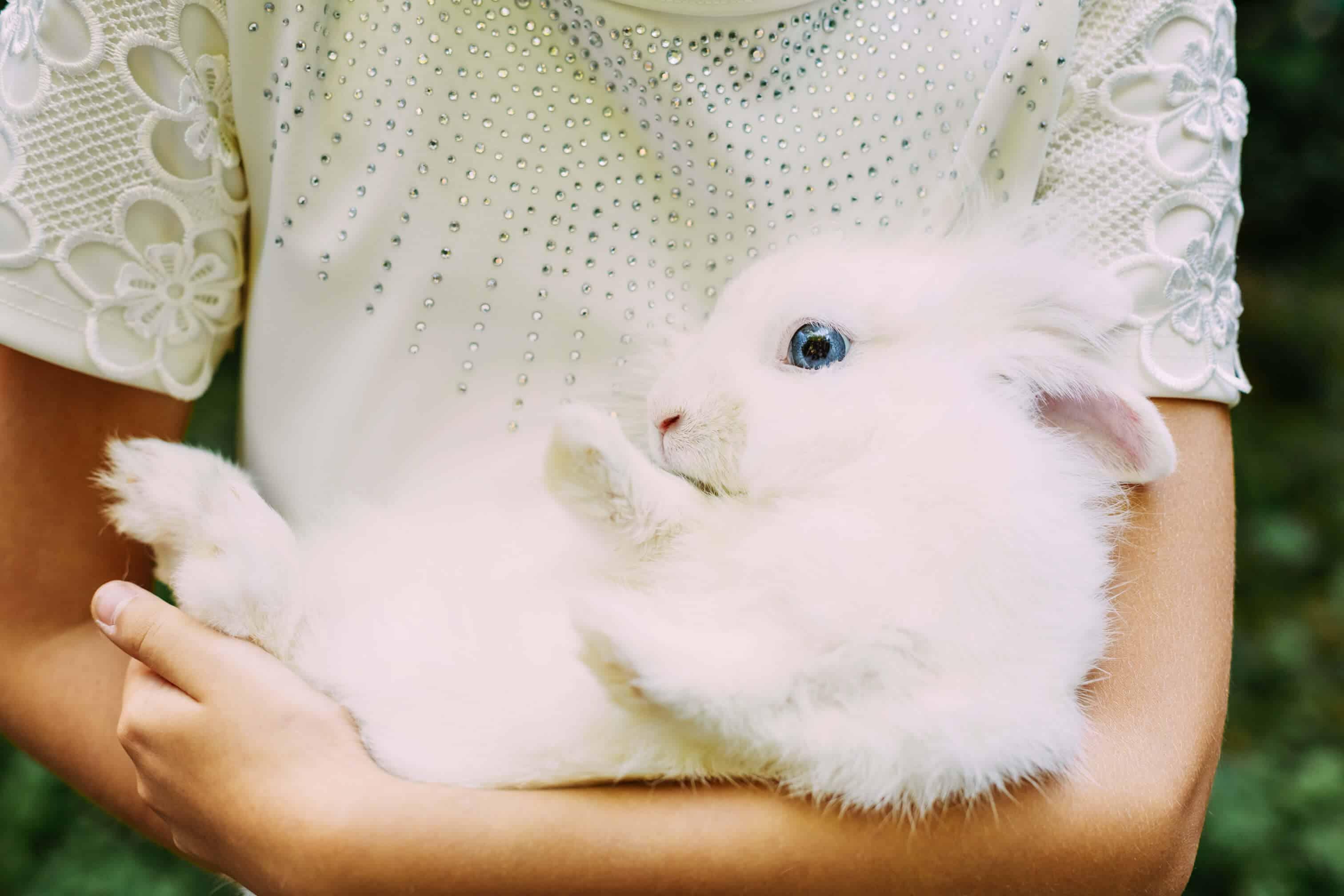 conejo enano no come